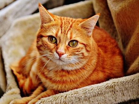 cat-1046544__340