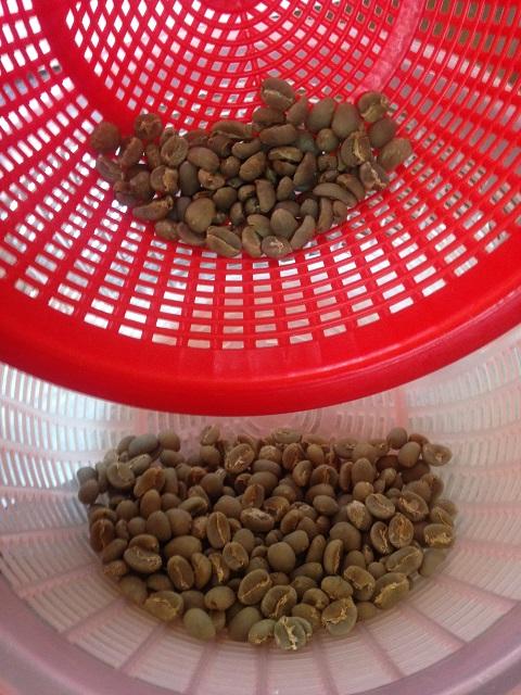 コーヒー生豆ハンドピック後全体