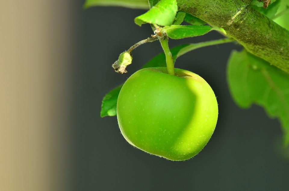 apple-1532055_960_720
