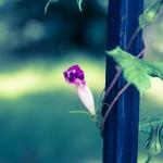 デジタル一眼レフカメラ初心者におすすめ!花撮影が上手くいく6つのルール